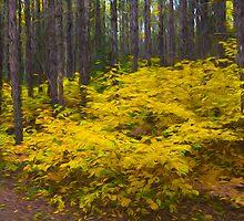 Algonquin Forest by faczen