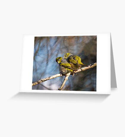 silvereye Cecil Hoskins Reserve Greeting Card