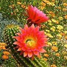 Springtime in Arizona by gcampbell