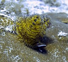 Yellow Christmas Tree Worm by Amy McDaniel