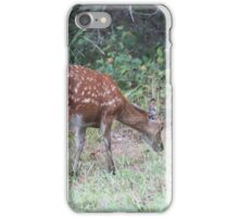 Sika Elk, Assateague iPhone Case/Skin