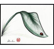 """Leaf Me Alone"" - Ladybug drawing Photographic Print"