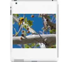 Extremely Yellow Hooded Oriole iPad Case/Skin