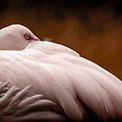 Flamingo At Rest by George Wheelhouse