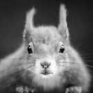 Red Squirrel - The Look by George Wheelhouse
