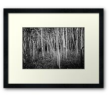 Mountain Ash Trees Framed Print