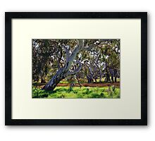 Strong Oz Eucalyptus Tree By Lorraine McCarthy Framed Print