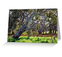 Strong Oz Eucalyptus Tree By Lorraine McCarthy Greeting Card