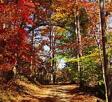 Autumn Path Through the woods by paulboggs