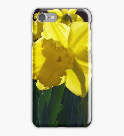 Daffodils dance in the sun iPhone Case/Skin