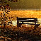 Autumn Morning At The Lake by Sharon Woerner