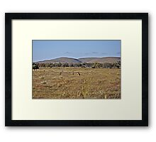 Kangaroos on the plains Framed Print