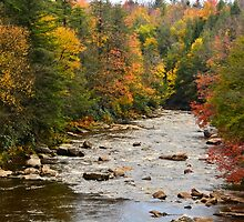 Blackwater River by Terry Everson