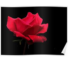 Simply a Red Rose  ! Poster