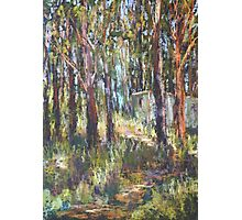 Gum Scrub - plein air paint out Photographic Print