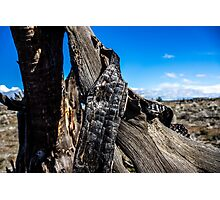 Desert Ribbon  Photographic Print