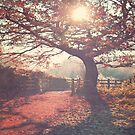 Sunlight shines through silhouetted tree. by Lyn  Randle