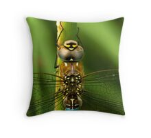 Common Hawker Dragonfly Throw Pillow