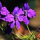 Purple flowers by Kerry  Hill
