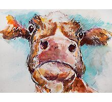 Stroppy Cow Photographic Print