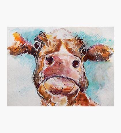 Stroppy Cow Photographic Print