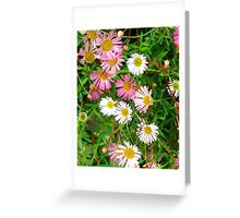 Pink Daisies Greeting Card