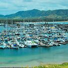 Coffs Harbour Marina by Penny Smith