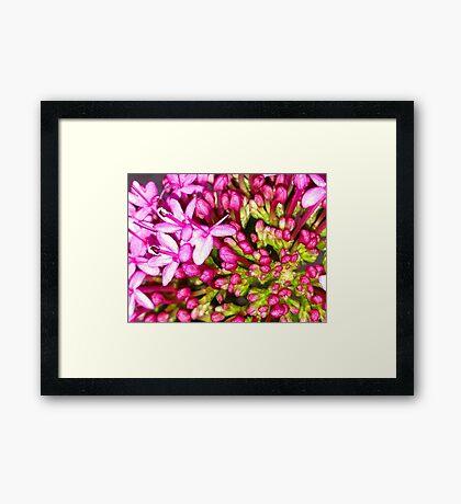 Dainty Pink Flower Framed Print