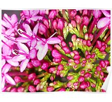Dainty Pink Flower Poster