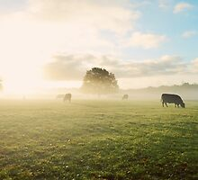 Morning Mist by Matthew Bonnington
