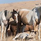 Pinto Fillies by Kelly Jay