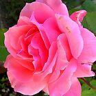 Rose - Blessings by lezvee