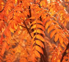 Mountain Ash Leaves - Autumn by Jim Sauchyn
