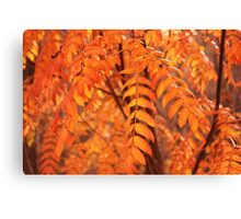 Mountain Ash Leaves - Autumn Canvas Print