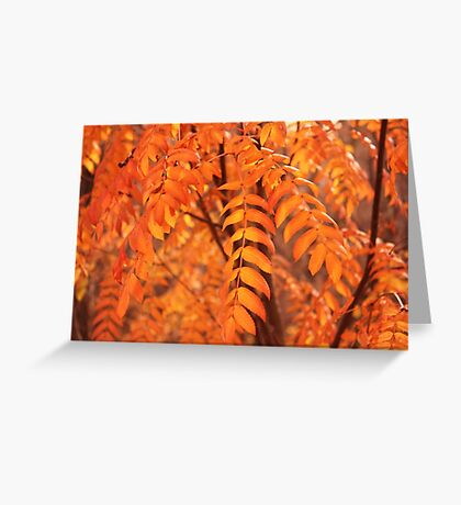 Mountain Ash Leaves - Autumn Greeting Card