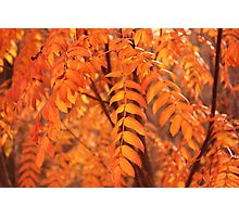 Mountain Ash Leaves - Autumn Photographic Print