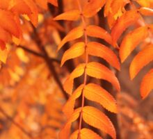Mountain Ash Leaves - Autumn Sticker