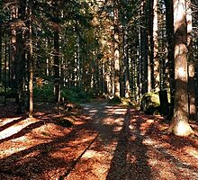 Indian summer forest trail | landscape photography by Patrick Jobst