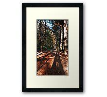 Indian summer forest trail | landscape photography Framed Print