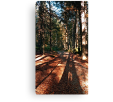 Indian summer forest trail | landscape photography Canvas Print