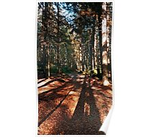 Indian summer forest trail | landscape photography Poster