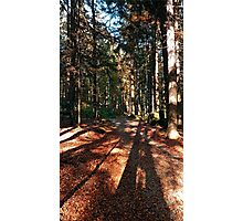 Indian summer forest trail | landscape photography Photographic Print