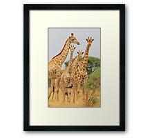 Giraffe - African Wildlife - Patterns in Nature Framed Print