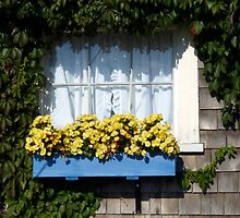 Blue Flower Box by phil decocco
