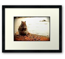 Red Squirrel in Winter Framed Print