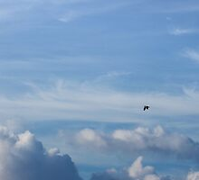 Seagull above the Clouds by David Denny