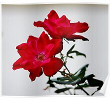 Color Me Red Flowers Poster