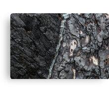 Tree bark after bush fire Canvas Print