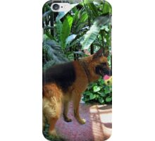 GERMAN SHEPARD PLAYS WITH BALL PICTURE iPhone Case/Skin