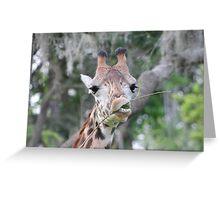 Giraffe headshot Greeting Card